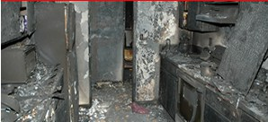 Professional mold remediation is necessary in this instance