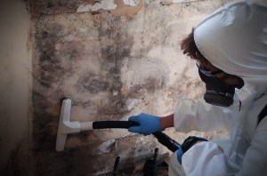 Mold remediation experts - Panhandle Cleaning & Restoration