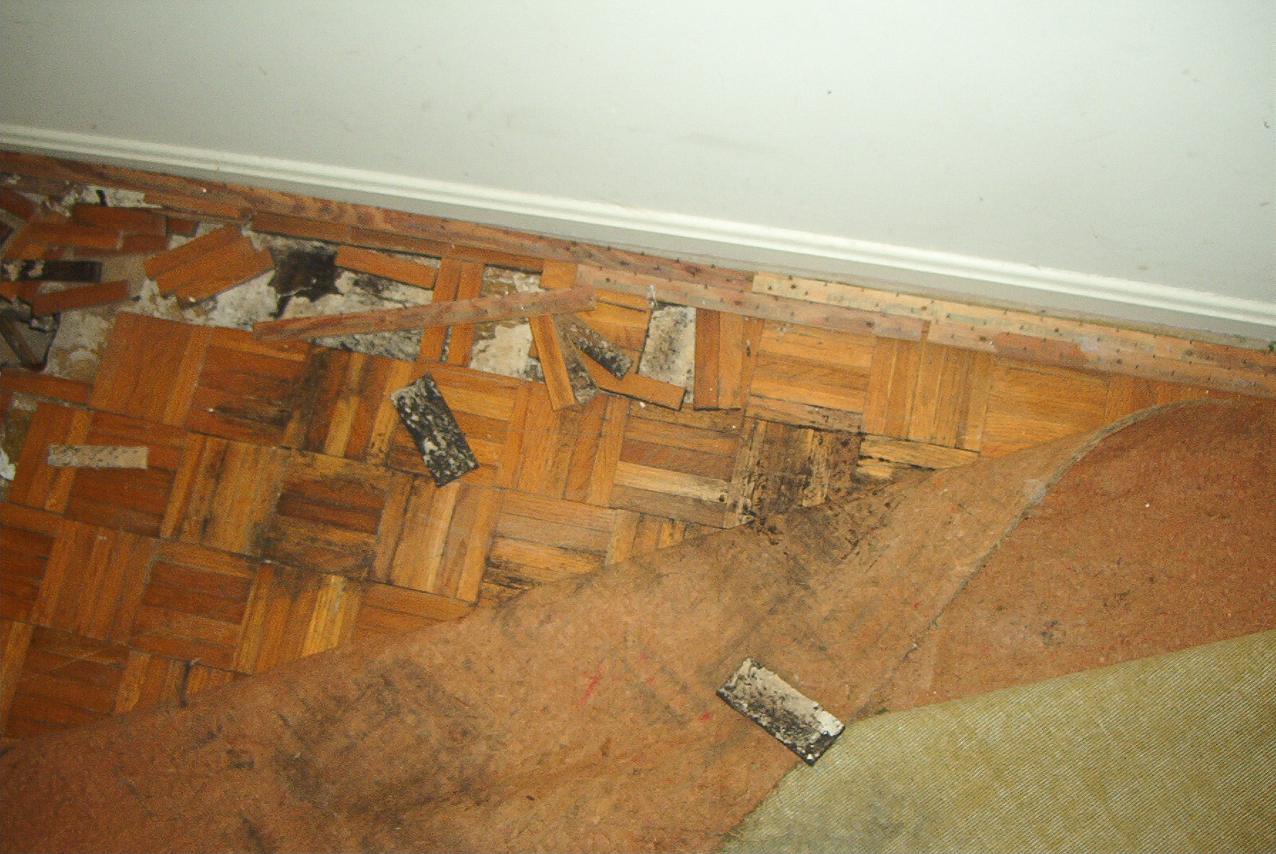 How to remove mold from under hardwood floors thefloors co for Wood floor under carpet