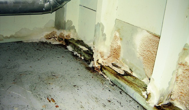 Home mold infestation